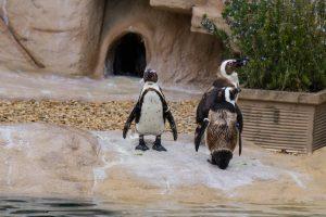 Pinguins • Zoomarine